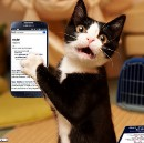 7 Reasons You Aren't Getting Better At Comedy and 9 Animal Pictures Pat Googled