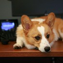8 Adorable Pups Celebrating Work Like a Dog Day