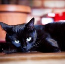 10 fascinating facts about black cats