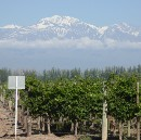 Visiting wineries in Mendoza, Argentina