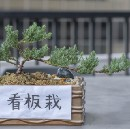 What Bonsai Can Teach About Product