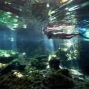 How to Stop Feeling Like You're Underwater — Life Tips from Pros and Ducks