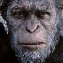 My New Obsession: Planet of the Apes