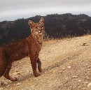 Feral Photography: amazing animal imagery from Silicon Valley trail cams