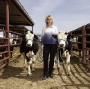 "Meet the Woman Using CRISPR to Breed All-Male ""Terminator Cattle"""