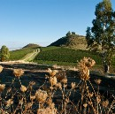 Into the Vines: The Wines and Winemakers of Sicily