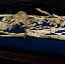 """Will the """"most complete skeleton ever"""" transform human origins?"""