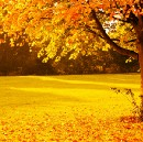 Autumn in our life.