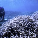 Why watching Chasing Coral on Netflix can help save the planet