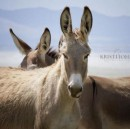 5 Things You Didn't Know About Wild Burros