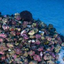 For the first time ever — images of a newly discovered reef