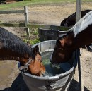 The Scatter Sunshine foundation sponsoring equine therapy for special needs riders