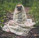 What is Pug.js (Jade) and How can we use it within a Node.js Web Application?
