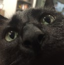What My Cat Taught Me About Product Design