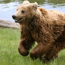 Don't Ignore Bears: The Pitfalls of Summarizing Data with Medians