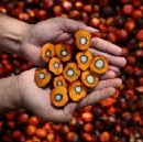 The Parable of Palm Oil