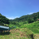 Japanese Rice Farms, Technology, & The Importance of Looking Stupid
