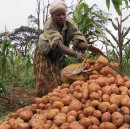 Nakuru County to invest heavily in Agriculture