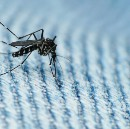 How Big Data can be used to fight the Zika virus