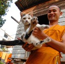 Meet the Abandoned Animals Adopted by Buddhist Monks