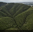 Not All Forestry Is Carbon Equal