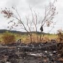 The old ways are gone: Papua New Guinea's tribal wars become more destructive