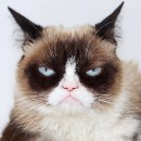 Grumpy Cats and new tech