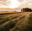 What Can Startup Communities Do for Rural America?