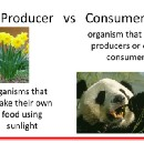 Understanding the Producer and Consumer philosophy