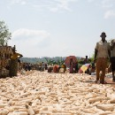 Reduced food waste means increased income for farmers in Rwanda