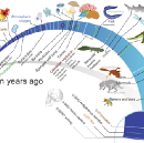 Why the Deep Dive into Evolutionary History?