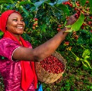 This company helps African farmers secure their land rights.   Karol Boudreaux