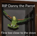 The Eight Stages of Grief After Your Parrot Flies Behind the Stove
