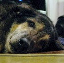 Pet Lovers Beware:  When The Drugs  Don't Work