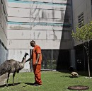 In Photos: The Florida Jail that Doubles as an Exotic Animal Zoo