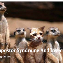 Of Impostor Syndrome and Insecurity