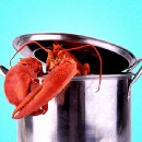Why Are We Still Boiling Lobsters Alive?