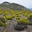 Aegean Ascension: Greek Wine Appreciated by the Pros