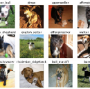 Dog Breed Classification: hands-on approach