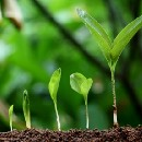 5 Business Tips to Go From Startup to Grownup