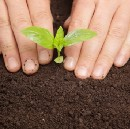 How to Plant Herbs in Ways that Grow Your Career