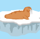 Designing for Walruses