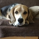 The Internal Monologue of the Beagle