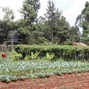 Solar Irrigation to Grow Smallholder Profits in Kenya