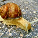 Zero Tolerance for Slow Pace — Specific Steps For Aggressively Fast Software Development