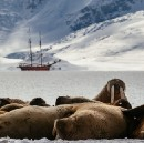 5 Animals Threatened by Arctic Oil Drilling