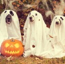 Candy, Costumes, and Closers: Marketing Lessons from Halloween