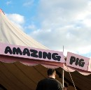 Much ado about a pig