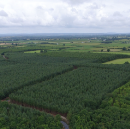 Drone Mapping Saves €150,000 in Purchase of Private Forestry
