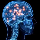 The unspooling of the brain